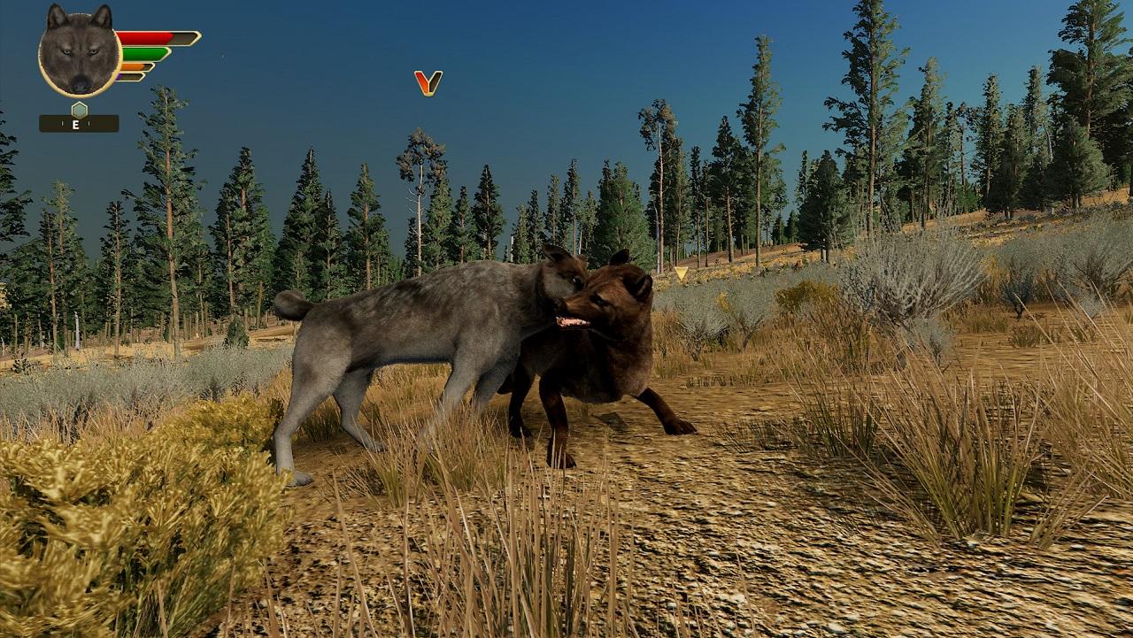 Wolf Wuest