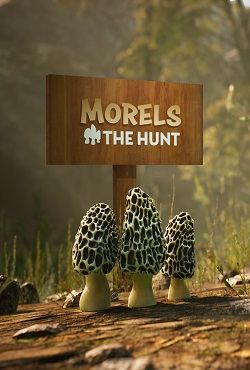 Morels The Hunt